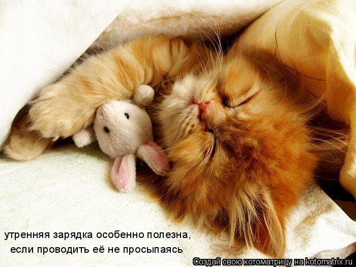 Котоматрица: утренняя зарядка особенно полезна, если проводить её не просыпаясь