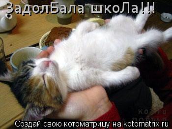 Котоматрица: ЗадолБала шкоЛа!!!