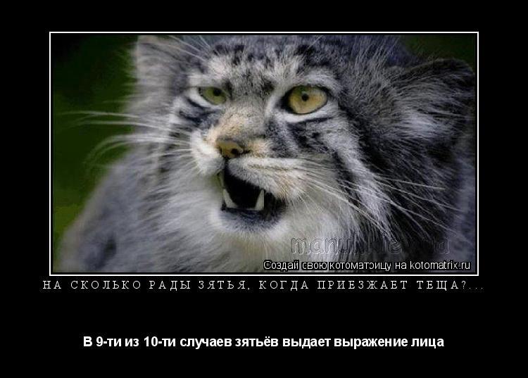 Котоматрица: На сколько рады зятья, когда приезжает тёща?... В 9-ти из 10-ти случаев зятьёв выдает выражение лица