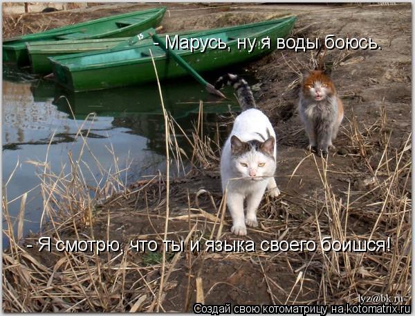 Котоматрица: - Марусь, ну я воды боюсь. - Я смотрю, что ты и языка своего боишся!