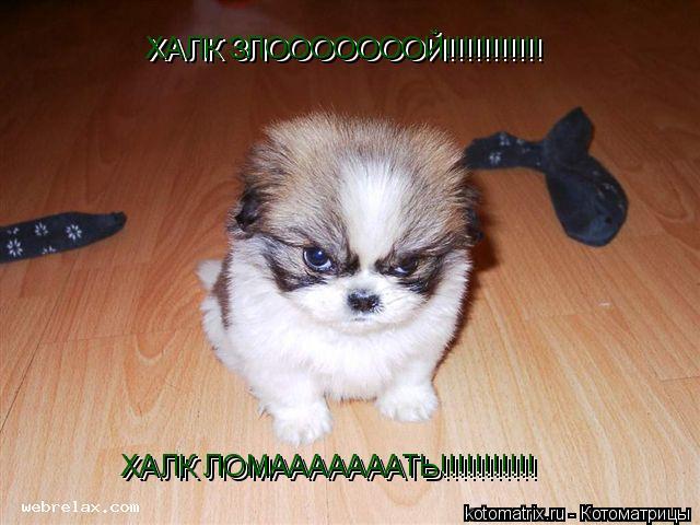 Котоматрица: ХАЛК ЗЛОООООООЙ!!!!!!!!!!! ХАЛК ЗЛОООООООЙ!!!!!!!!!!! ХАЛК ЛОМАААААААТЬ!!!!!!!!!!! ХАЛК ЛОМАААААААТЬ!!!!!!!!!!!