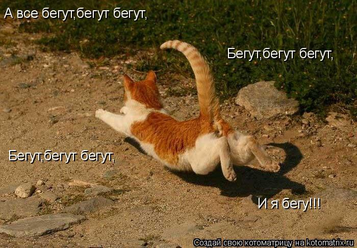 Котоматрица: А все бегут,бегут бегут, Бегут,бегут бегут, Бегут,бегут бегут, И я бегу!!!