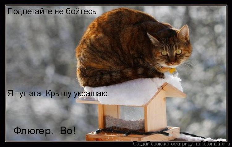 Котоматрица: Подлетайте не бойтесь Я тут эта… Крышу украшаю… Флюгер…  Во!