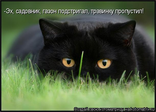 Котоматрица: -Эх, садовник, газон подстригал, травинку пропустил!
