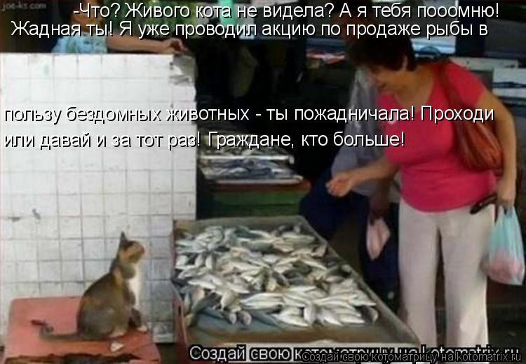 Котоматрица: -Что? Живого кота не видела? А я тебя пооомню! Жадная ты! Я уже проводил акцию по продаже рыбы в пользу бездомных животных - ты пожадничала! Пр