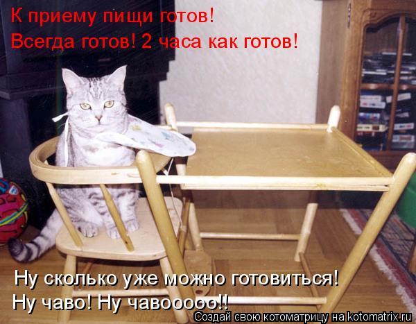 Котоматрица: К приему пищи готов! Ну сколько уже можно готовиться! Всегда готов! 2 часа как готов! Ну чаво! Ну чавооооо!!