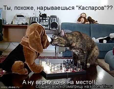"Котоматрица: А ну верни коня на место!! Ты, похоже, нарываешься ""Каспаров""??"