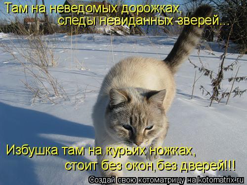 Котоматрица: Там на неведомых дорожках, следы невиданных зверей... Избушка там на курьих ножках, стоит без окон,без дверей!!!