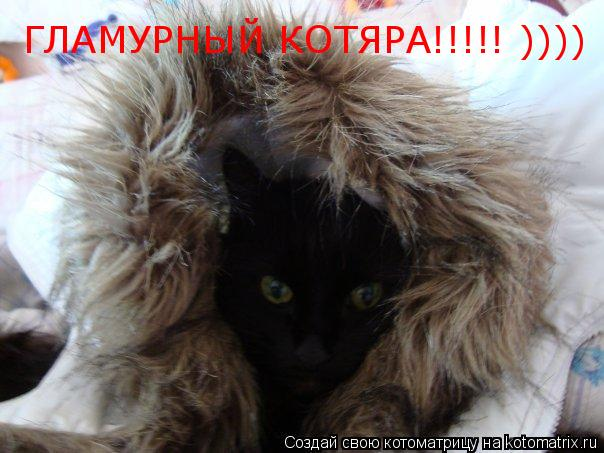 Котоматрица: ГЛАМУРНЫЙ КОТЯРА!!!!! ))))
