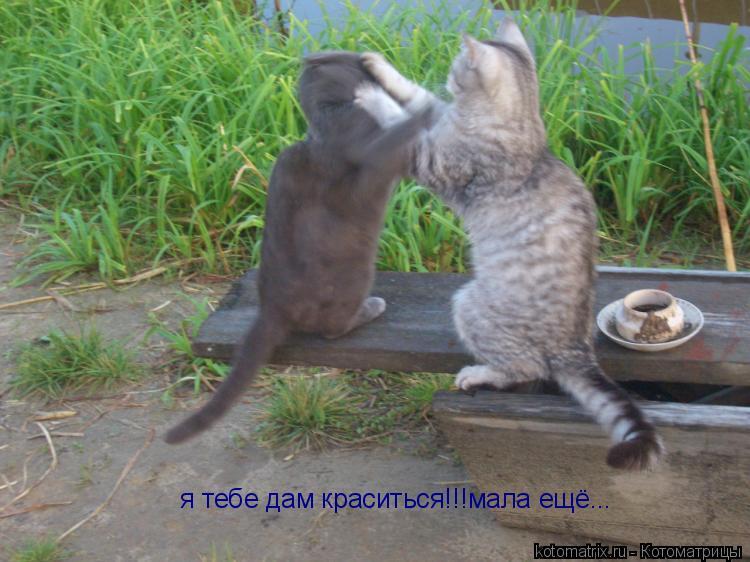 Котоматрица: я тебе дам краситься!!!            я тебе дам краситься!!!мала ещё...