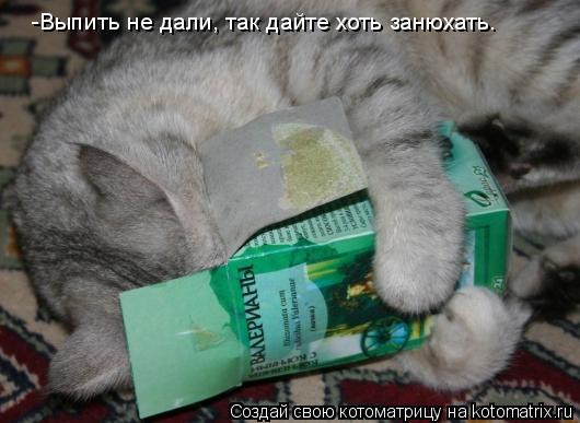 Котоматрица: -Выпить не дали, так дайте хоть занюхать.