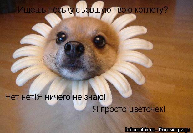 Котоматрица: Ищешь пёську съевшую твою котлету? Нет нет!Я ничего не знаю! Я просто цветочек!