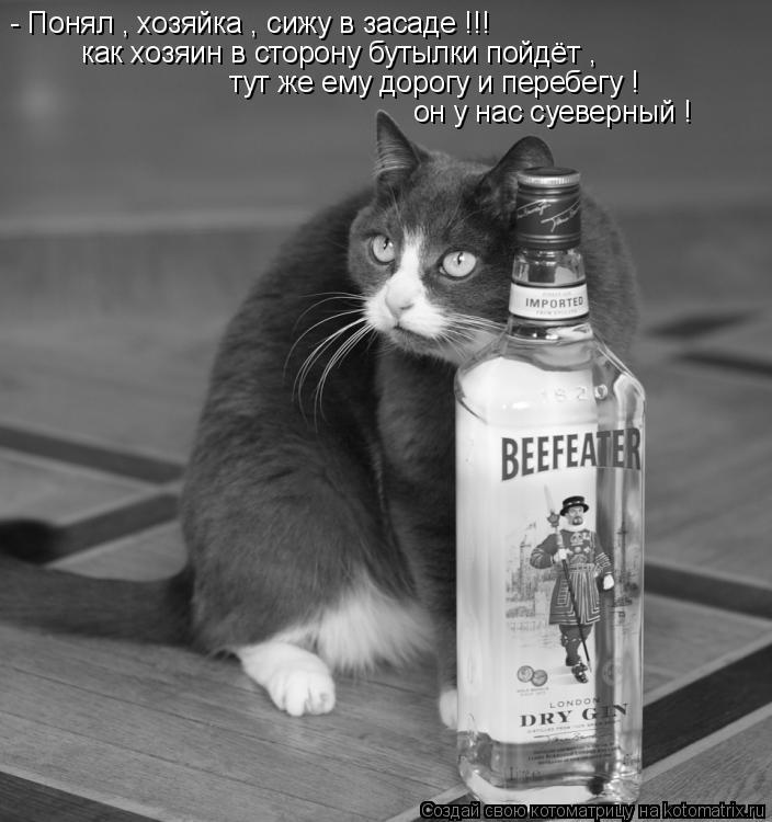 Котоматрица: - Понял , хозяйка , сижу в засаде !!! как хозяин в сторону бутылки пойдёт ,  тут же ему дорогу и перебегу ! он у нас суеверный !
