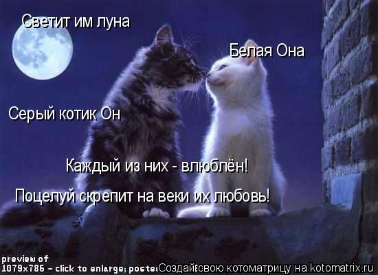 Котоматрица: Светит им луна Белая Она Серый котик Он Каждый из них - влюблён! Поцелуй скрепит на веки их любовь!