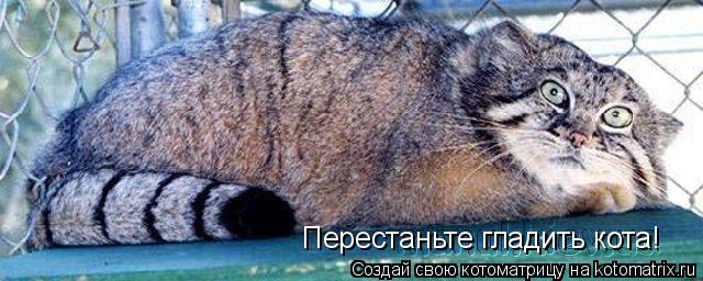 Котоматрица: Перестаньте гладить кота!
