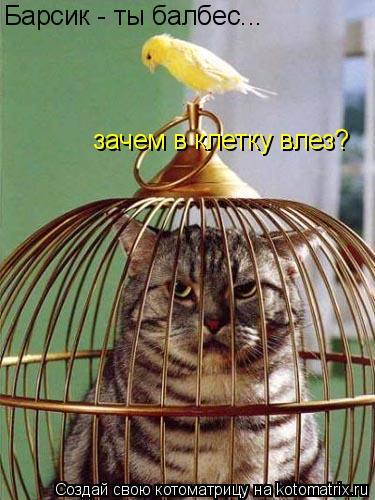 Котоматрица: Барсик - ты балбес... зачем в клетку влез?