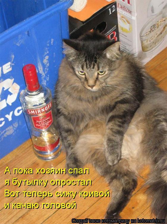 Котоматрица: А пока хозяин спал я бутылку опростал Вот теперь сижу кривой и качаю головой