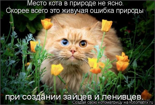 Котоматрица: при создании зайцев и ленивцев. Место кота в природе не ясно.  Скорее всего это живучая ошибка природы