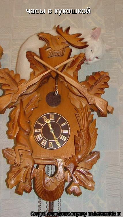 Котоматрица: часы с кукошкой