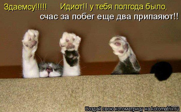Котоматрица: Здаемсу!!!!! Идиот!! у тебя полгода было, счас за побег еще два припаяют!!