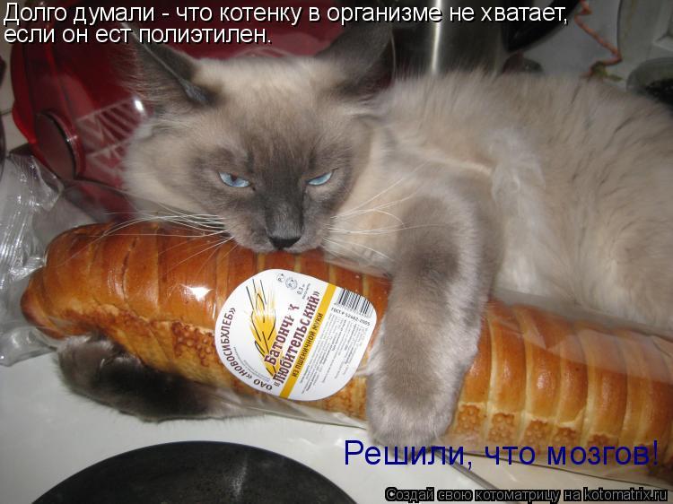 Котоматрица: Долго думали - что котенку в организме не хватает, если он ест полиэтилен. Решили, что мозгов! Решили, что мозгов!