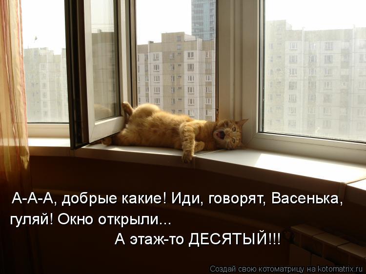 Котоматрица: А-А-А, добрые какие! Иди, говорят, Васенька,  гуляй! Окно открыли...   А этаж-то ДЕСЯТЫЙ!!!