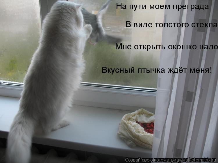 Котоматрица: На пути моем преграда В виде толстого стекла Мне открыть окошко надо Вкусный птычка ждёт меня!