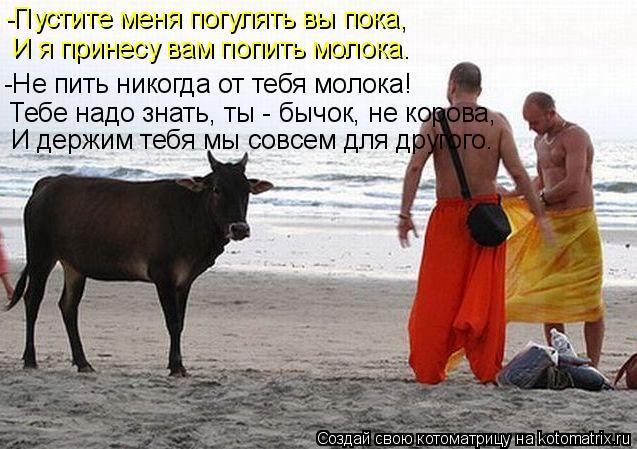 Котоматрица: -Пустите меня погулять вы пока, И я принесу вам попить молока. -Не пить никогда от тебя молока! Тебе надо знать, ты - бычок, не корова, И держим