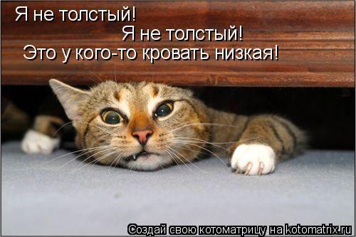 Котоматрица: Я не толстый! Я не толстый! Это у кого-то кровать низкая!