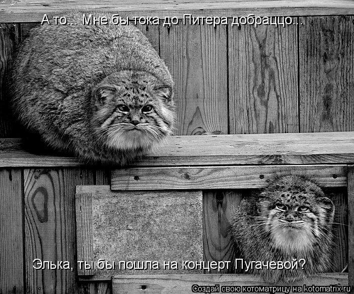 Котоматрица: Элька, ты бы пошла на концерт Пугачевой? А то... Мне бы тока до Питера добраццо...