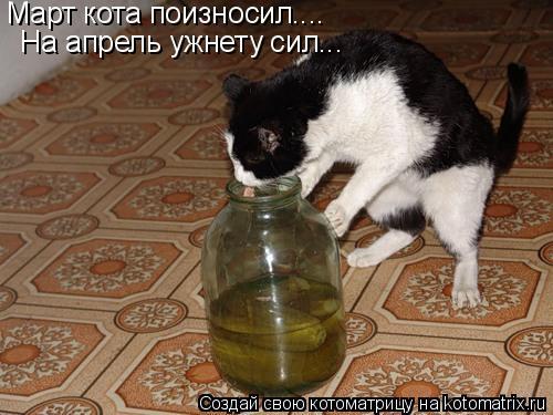 Котоматрица: Март кота поизносил.... На апрель ужнету сил...