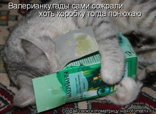 Котоматрица: Валерианку,гады сами сожрали хоть коробку тогда понюхаю