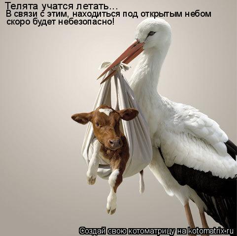 Котоматрица: Телята учатся летать... В связи с этим, находиться под открытым небом  скоро будет небезопасно!