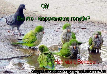 Котоматрица: Ой! Вы кто - марсианские голуби? Нет,мы с Венеры...
