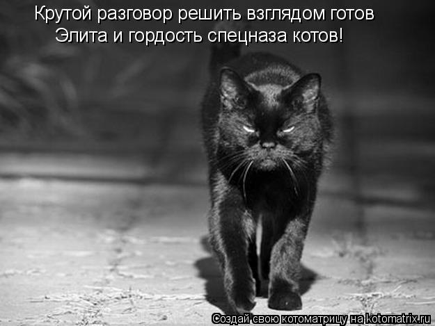Котоматрица: Крутой разговор решить взглядом готов Элита и гордость спецназа котов!