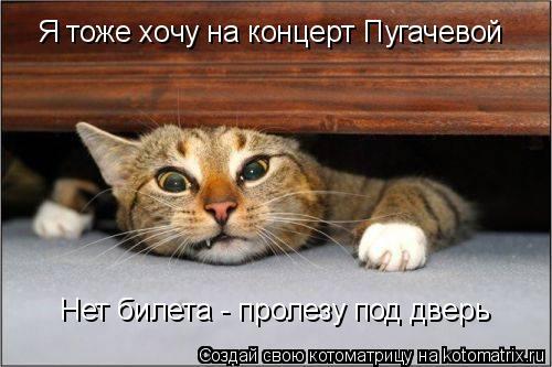 Котоматрица: Нет билета - пролезу под дверь Я тоже хочу на концерт Пугачевой