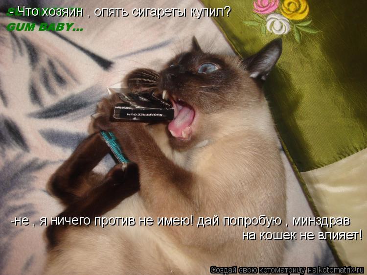 Котоматрица: - Что хозяин , опять сигареты купил? -не , я ничего против не имею! дай попробую , минздрав на кошек не влияет!