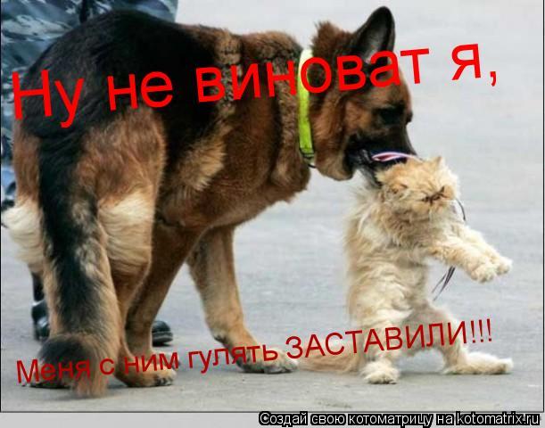 Котоматрица: Ну не виноват я,    Меня с ним гулять ЗАСТАВИЛИ!!!