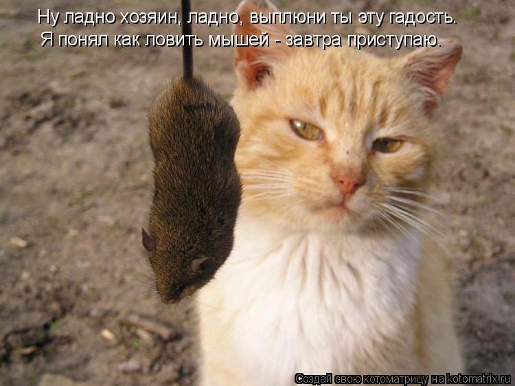 Котоматрица: Ну ладно хозяин, ладно, выплюни ты эту гадость.  Я понял как ловить мышей - завтра приступаю.