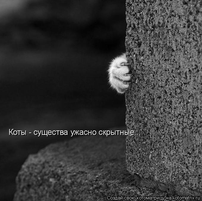 Котоматрица: Коты - существа ужасно скрытные...