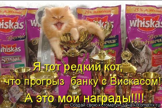 Котоматрица: Я тот редкий кот,  что прогрыз  банку с Вискасом!  А это мои награды!!!!