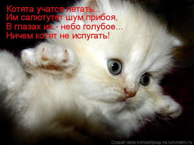 Котоматрица: Котята учатся летать... Им салютутет шум прибоя, В глазах их - небо голубое... Ничем котят не испугать!