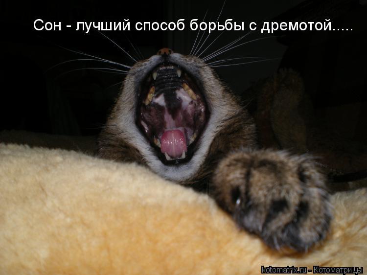 Котоматрица: Сон - лучший способ боpьбы с дремотой.....