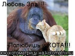 Котоматрица: Любовь Зла!!! Полюбишь и КОТА!!!