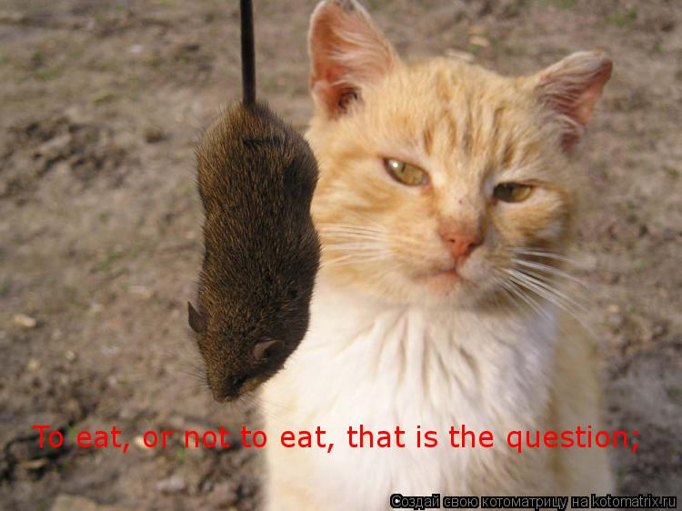 Котоматрица: To eat, or not to eat, that is the question;