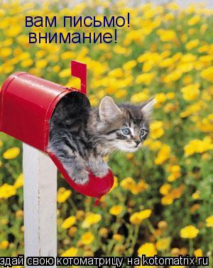Котоматрица: вам письмо! внимание!