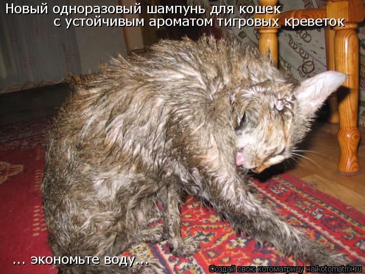 Котоматрица: Новый одноразовый шампунь для кошек с устойчивым ароматом тигровых креветок ... экономьте воду...