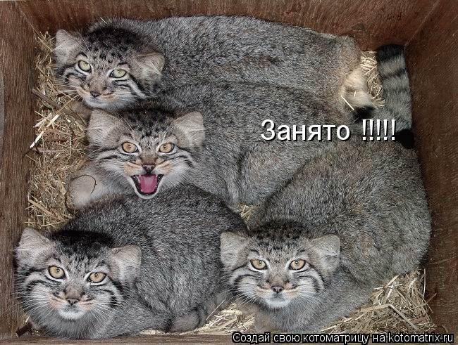Котоматрица: Занято !!!!!