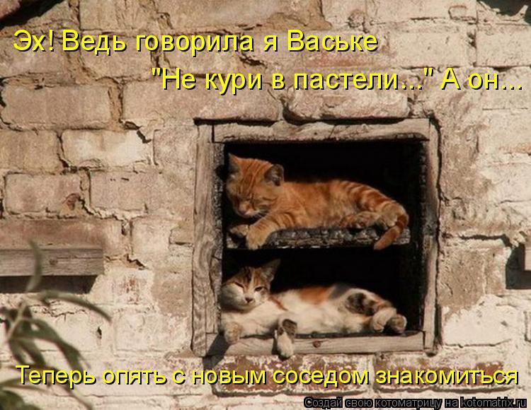 """Котоматрица: Эх! Ведь говорила я Ваське  """"Не кури в пастели..."""" А он...  Теперь опять с новым соседом знакомиться"""