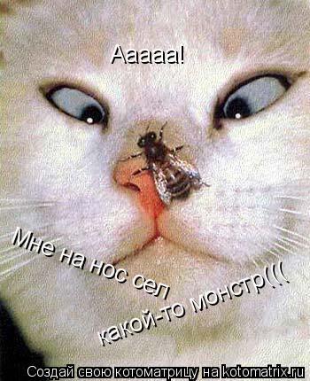 Котоматрица: Ааааа! Мне на нос сел какой-то монстр(((
